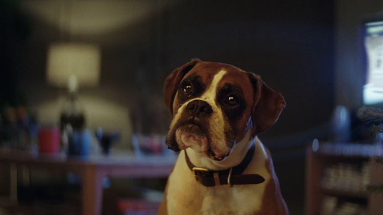 Dougal Wilson - John Lewis - Buster the Boxer